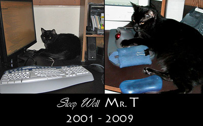 Aarkeybabble : Sleep well Mr.T - you were the sweetest cat I have ever known